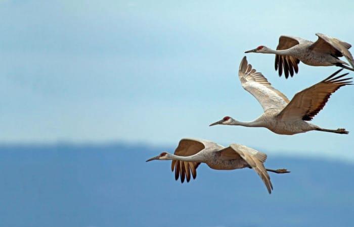 Science: Bird senses can improve drone navigation