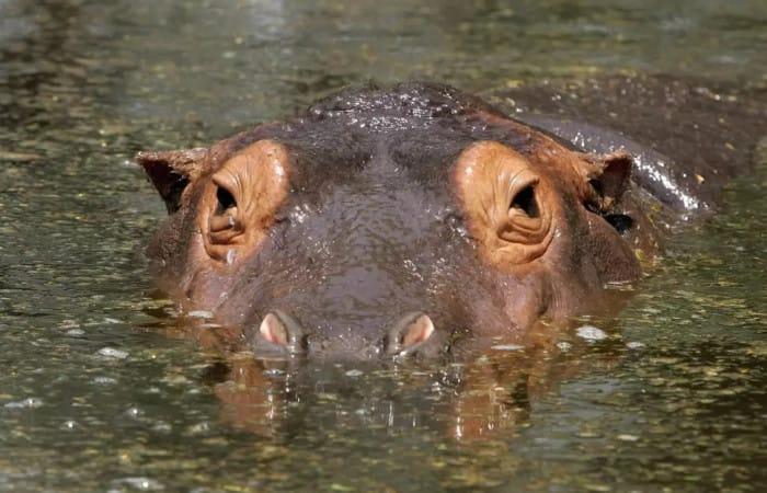 Tourist dies in hippo attack while taking photos on shores of Kenyan lake