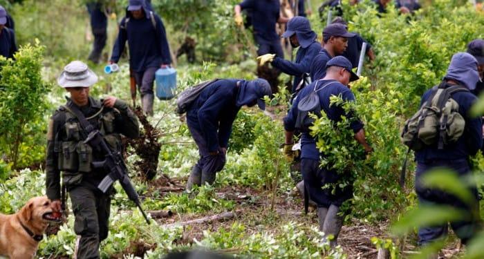 Desperate Venezuelan migrants turn to Colombia coca plantations