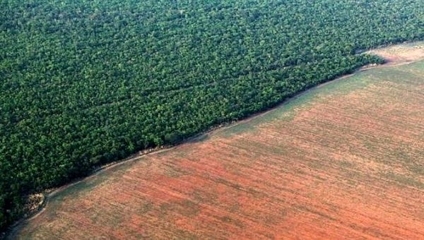 Deforestation: Tropical tree losses persist at high levels