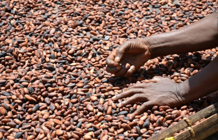 Nigeria, Cameroon plan to team up to agree cocoa premium with buyers