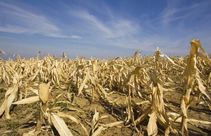 Australia launches billion-dollar drought plan