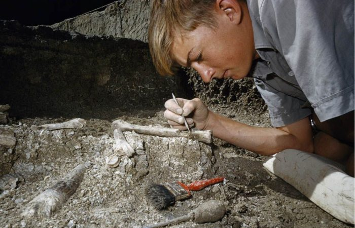 Science: 385-million-year-old forest discovered