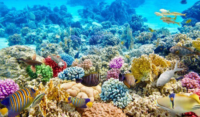 Science: Underwater speakers help revive dying coral reefs
