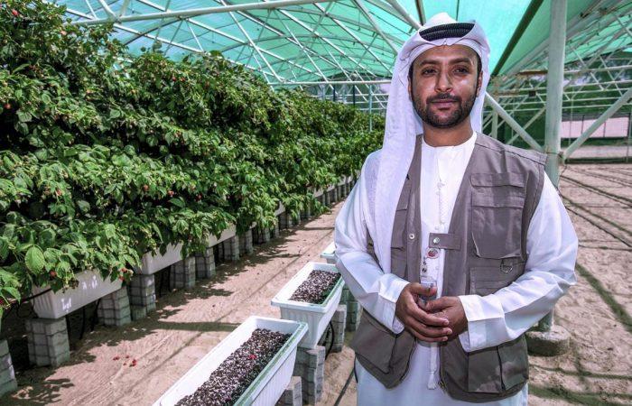 UAE to grow raspberries, blackberries commercially