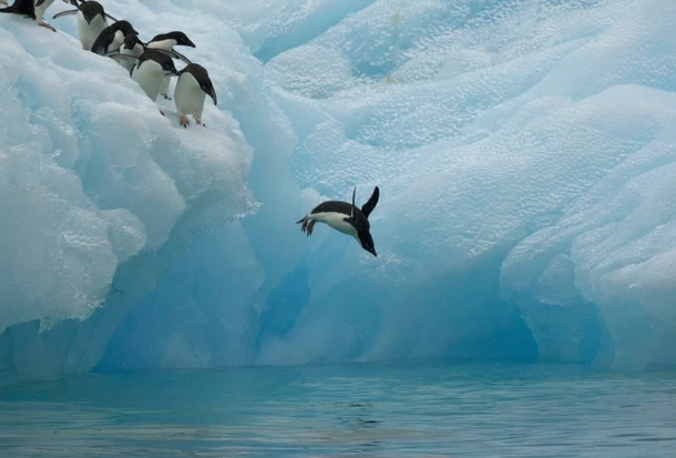 Science: Penguins help researchers identify vulnerable areas of the Antarctic