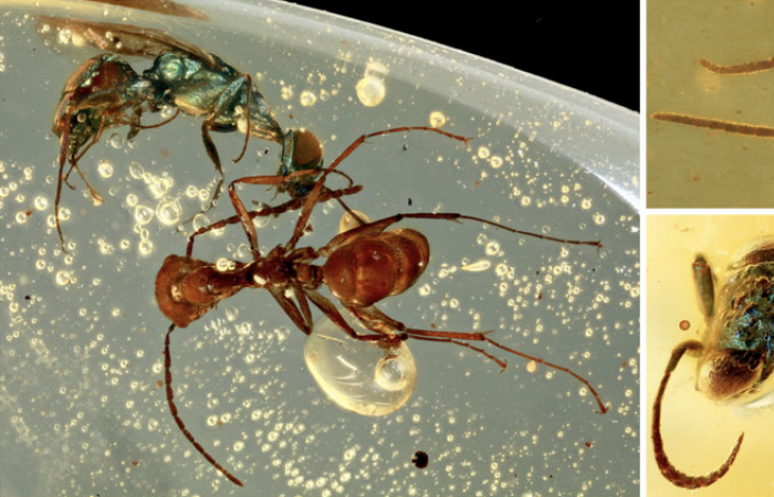 Science: Amber fossils reveal the true colours of ancient insects