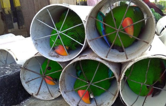 Indonesia police reported on smuggled parrots stuffed in plastic bottles