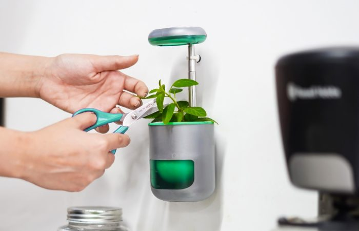 Smart plant care system utilises self-watering tech
