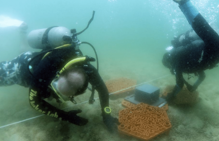 Technology: Coral restoration with 3D-printed 'reef tiles'