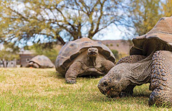 Former zoo employee sentenced for trafficking endangered tortoises